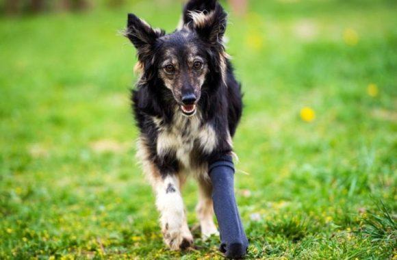 Najczęstsze problemy z kośćmi i stawami u młodych psów